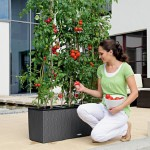 Growing Vegetables in Self Watering Pots: Unique Advantage of Time, Ease and Comfort