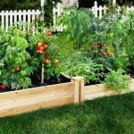 What Are the Best Veggies to Grow in Unique Garden Beds
