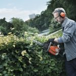 How to Cut Hedges Into Unique Shapes