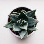 Succulents: A Unique Way to Greenify Your Indoor Space