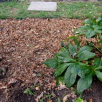 Exploring the Pros and Cons of the Different Types of Mulch