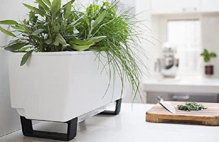 grow herbs on modern plant