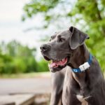 Dog Tracking Collar: Keep Your Furry Friend Protected