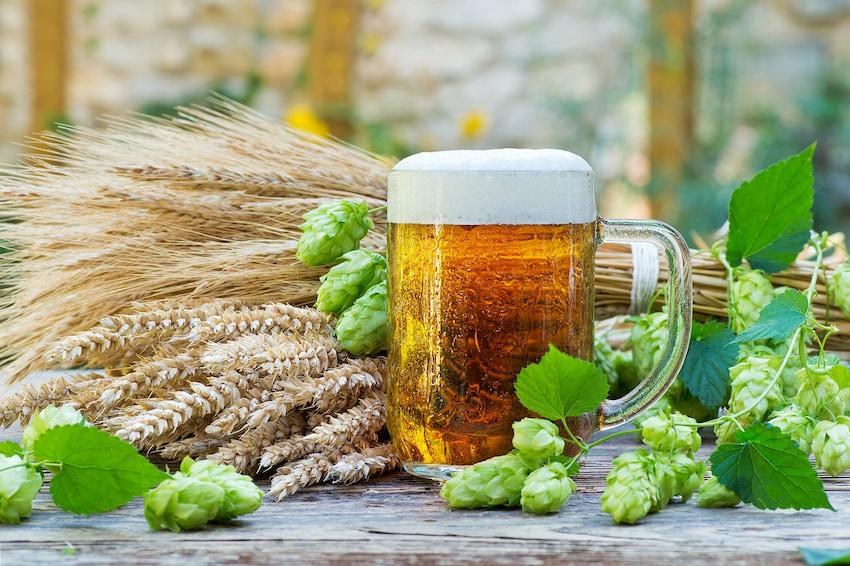 hop plant based beer
