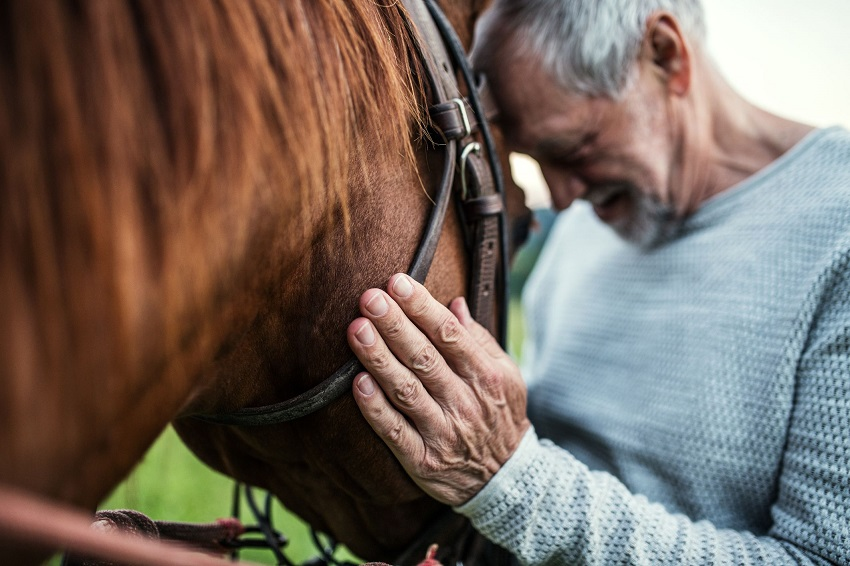 old man holding a horse