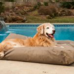 How to Choose an Outdoor Bed for Your Dog